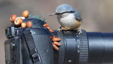 攝像機拍鳥結果被鳥叼走