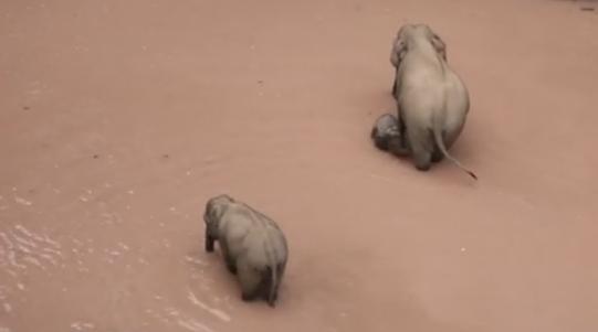 15頭野象出山 玩翻天!