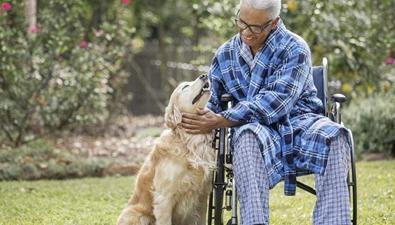 寵物狗幫主人推輪椅
