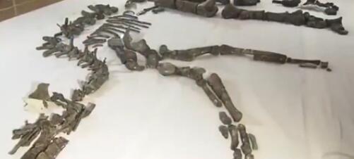 日本最大恐龍化石正式展出