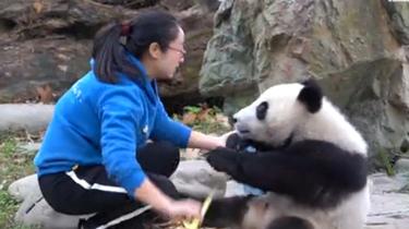 熊貓社區短視頻 小姐姐來和我跳個舞吧