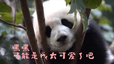 熊貓社區短視頻 今天也是愛你的一天喲