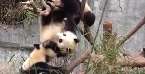 熊貓社區 功夫熊貓大比拼