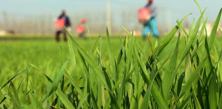 又到春耕時 綠色發展是今年春耕生産新亮點