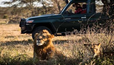 守護非洲獅群的中國70後