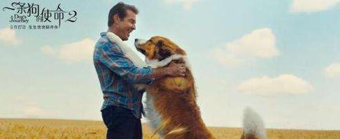 《一條狗的使命2》暖心來襲