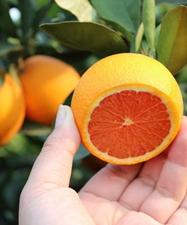 航拍中國臍橙之鄉秭歸