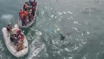 墨西哥:動物保護組織解救被困座頭鯨