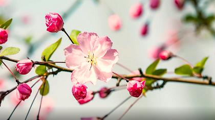 最美人間四月天,燕磯新城春色濃