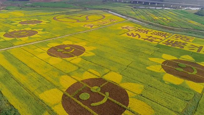 巨幅稻田畫 別樣豐收景