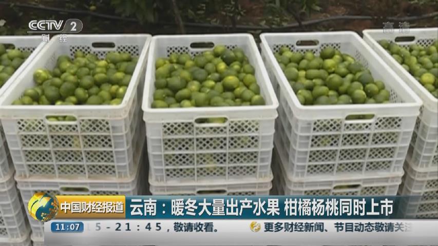 雲南:暖冬大量出産水果 柑橘楊桃同時上市