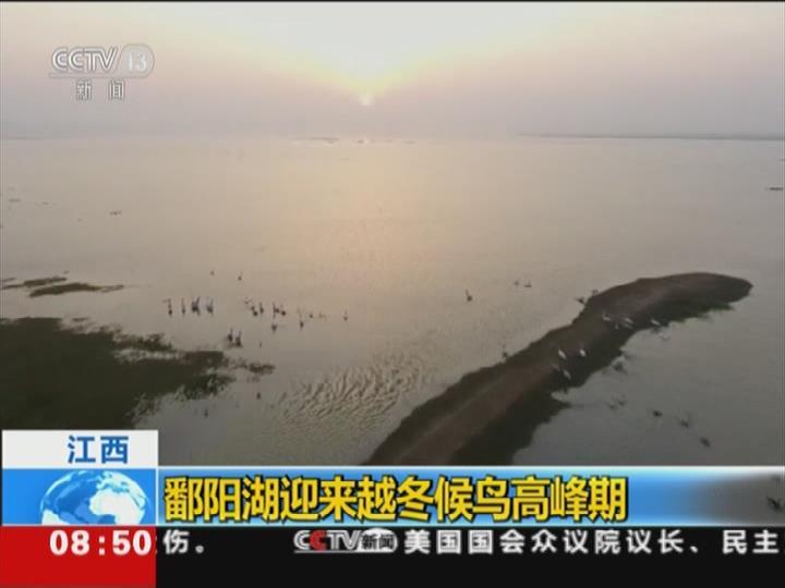 鄱陽湖:候鳥紛紛來越冬