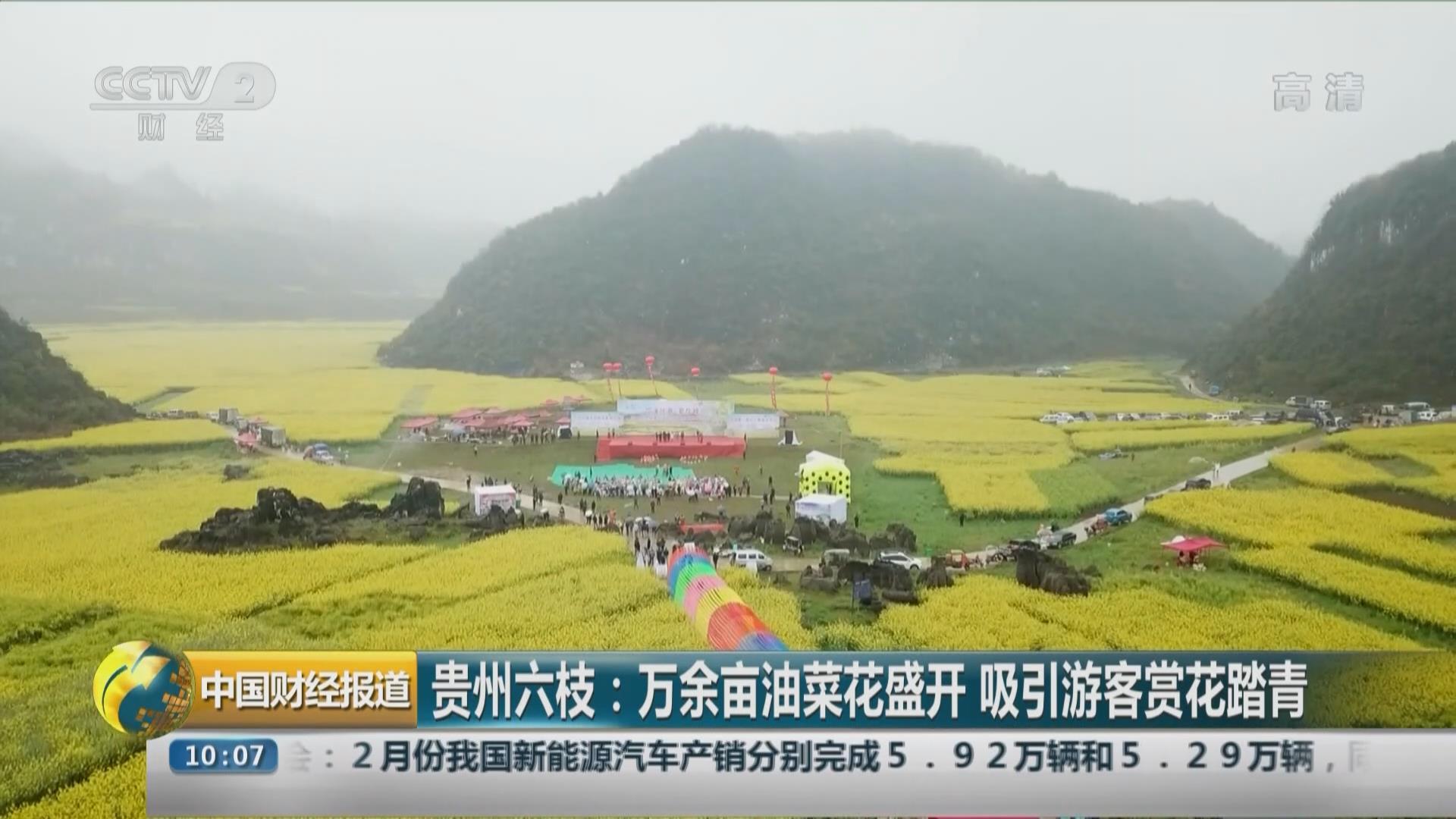 貴州六枝:萬余畝油菜花盛開 吸引遊客賞花踏青