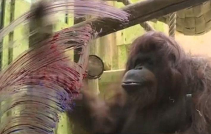 法國:50歲紅毛猩猩 平日喜愛涂鴉
