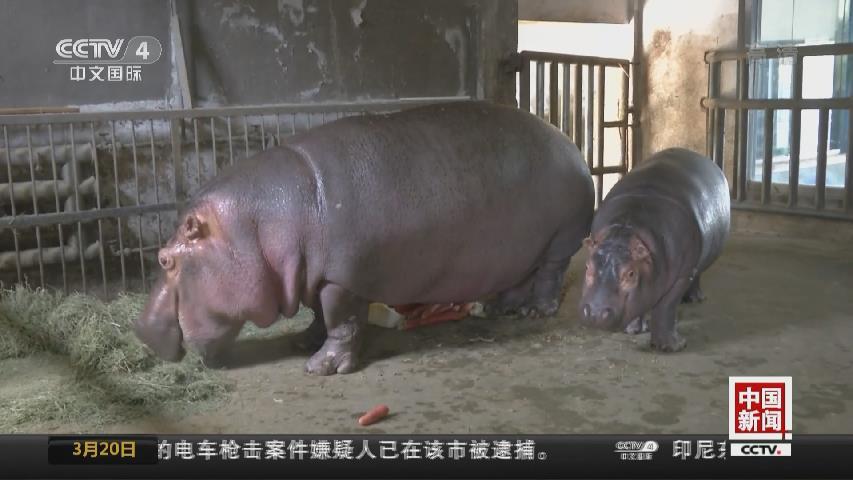 """西安秦嶺野生動物園新生寶寶""""扎堆賣萌"""""""