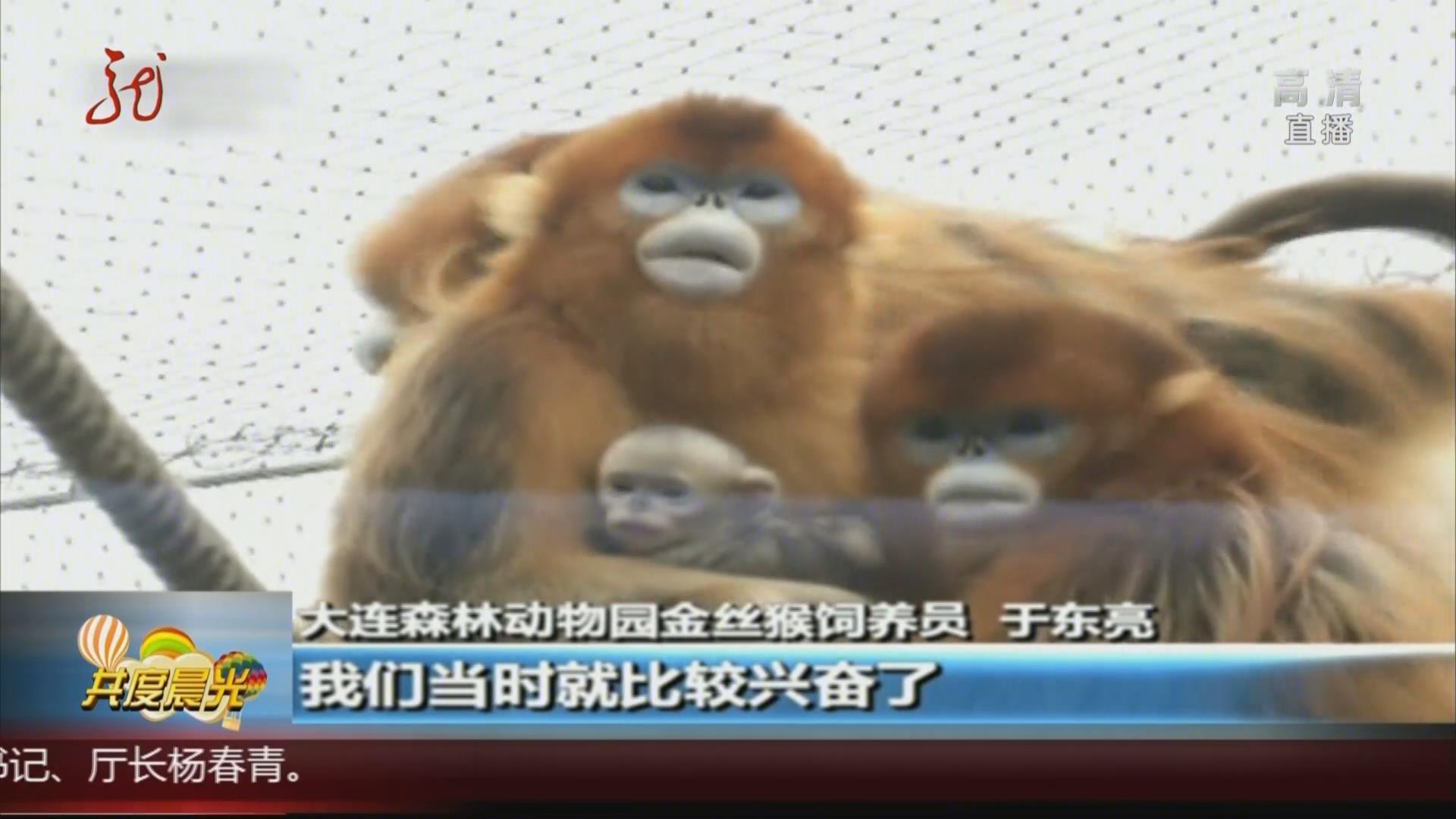 遼寧:金絲猴家族添六只猴寶寶