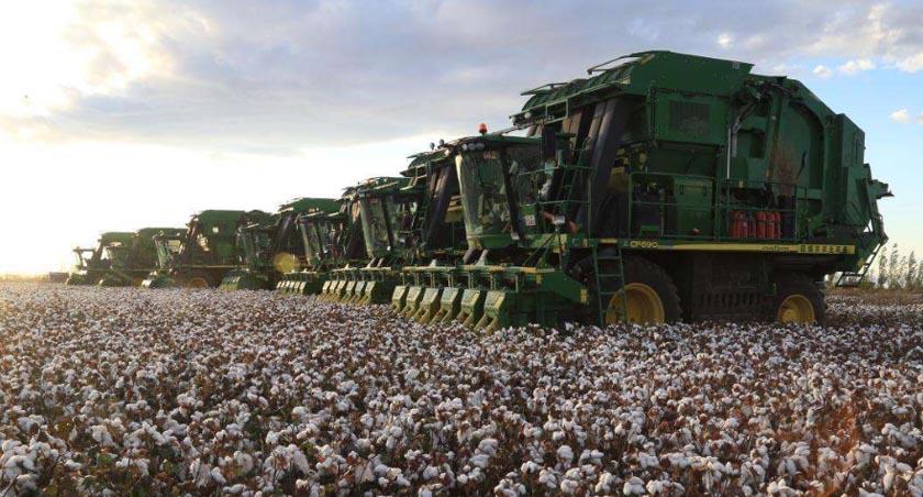 新疆:圖木舒克——百萬畝棉花開始機械化採收