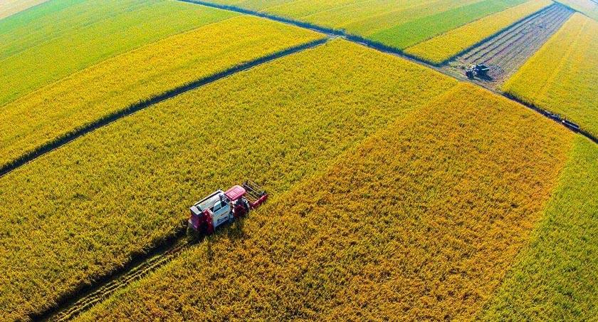 我國1600億元信貸資金支持秋糧收購