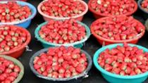 上海:水果市場草莓大批量上市 價格下行明顯
