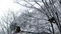 陜西:雪落秦嶺 兩只大熊貓爬樹競技