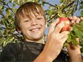 男孩吃完蘋果踢球哮喘發作