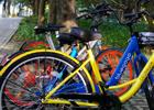 【新華微視評】自行車也是一種時尚選擇
