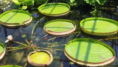 水裏的太陽電池板——王蓮