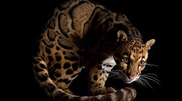 雲南拍到瀕危野生動物影像