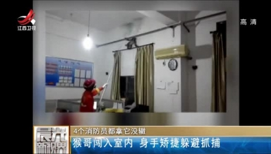 4個消防員都拿它沒轍:猴哥闖入室內 身手矯捷躲避抓捕