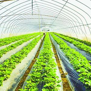 寧夏海原:高標準設施蔬菜園區助力脫貧
