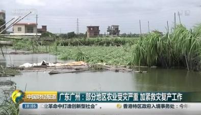 廣東廣州:部分地區農業受災嚴重 加緊救災復産工作