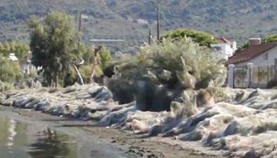 希臘小鎮海岸線被巨型蜘蛛網覆蓋