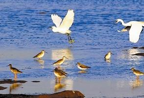 波羅湖濕地大批候鳥陸續南遷