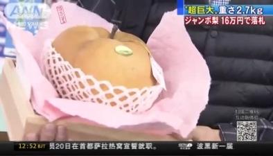 日本超大梨拍賣 一個近萬人民幣