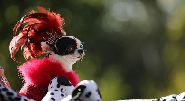 汪星人秀場:紐約舉行萬聖節狗狗變裝遊行