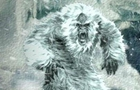 """""""喜馬拉雅雪人""""其實是熊?"""