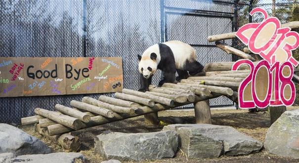 多倫多:最後一次看熊貓