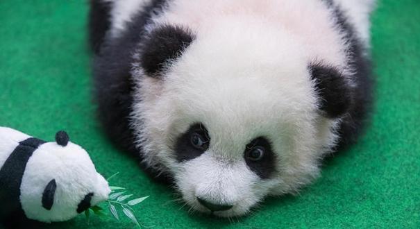我們都愛大熊貓