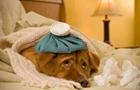 中美研究人員發現新型狗流感病毒