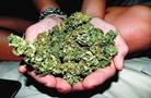 震驚!調查估算日本130萬人有吸食大麻經歷