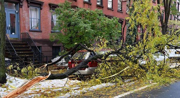 紐約今冬初雪比預期嚴重 壓垮路邊樹木