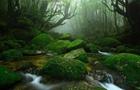 日本屋久島突降暴雨 266名登山客被困
