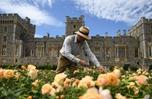 英國溫莎城堡東露臺花園40年來將首度向公眾開放