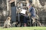 """英國鋼琴家對""""猴""""彈琴"""