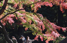 第23屆日中卡拉OK大賽在東京落幕
