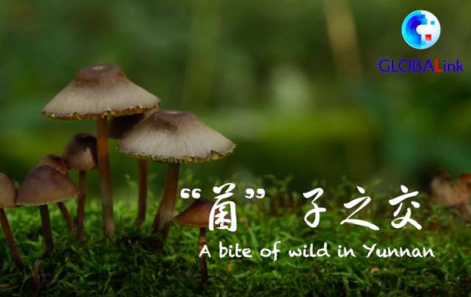 """全球连线 寻找生物多样性的奥秘·""""菌""""子之交"""