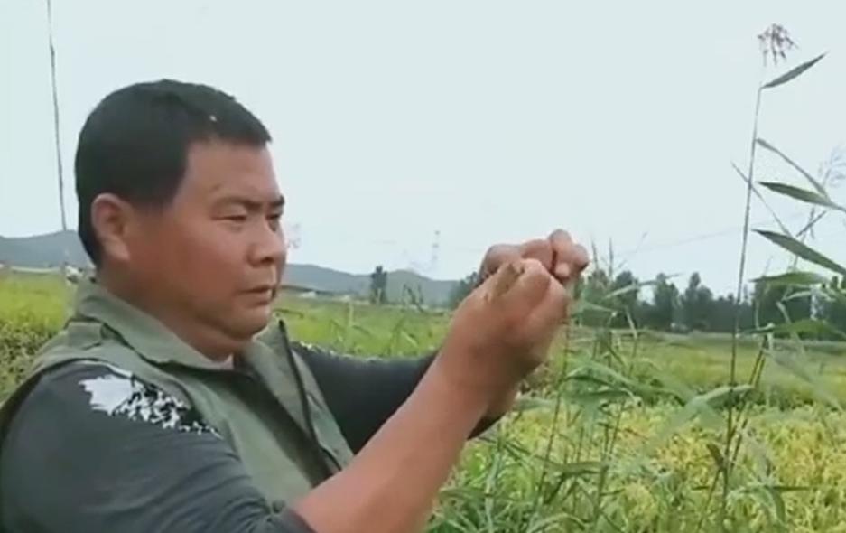 """全球连线 让鸟儿飞!守护候鸟迁徙的""""中国鸟爸"""""""