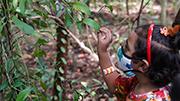 在歡樂中啟蒙斯下一代保護蝴蝶和樹木